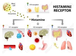 Зачем нам гистамин и как он связан с аллергией?